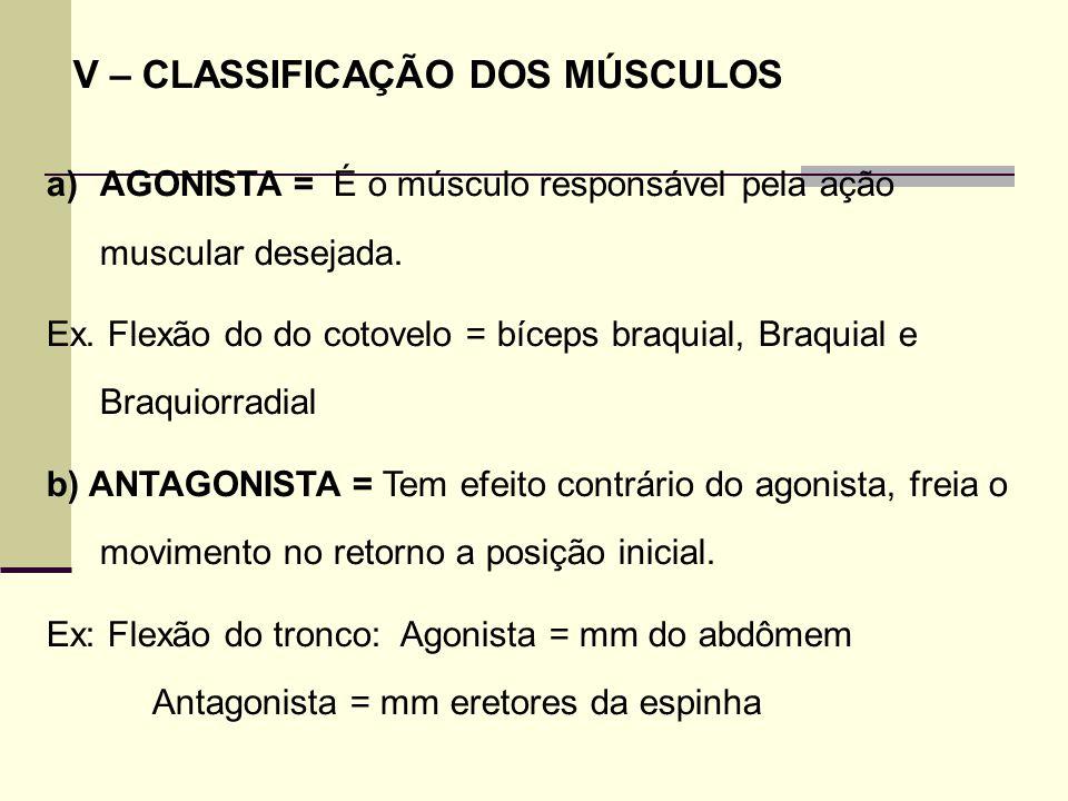 V – CLASSIFICAÇÃO DOS MÚSCULOS a)AGONISTA = É o músculo responsável pela ação muscular desejada. Ex. Flexão do do cotovelo = bíceps braquial, Braquial