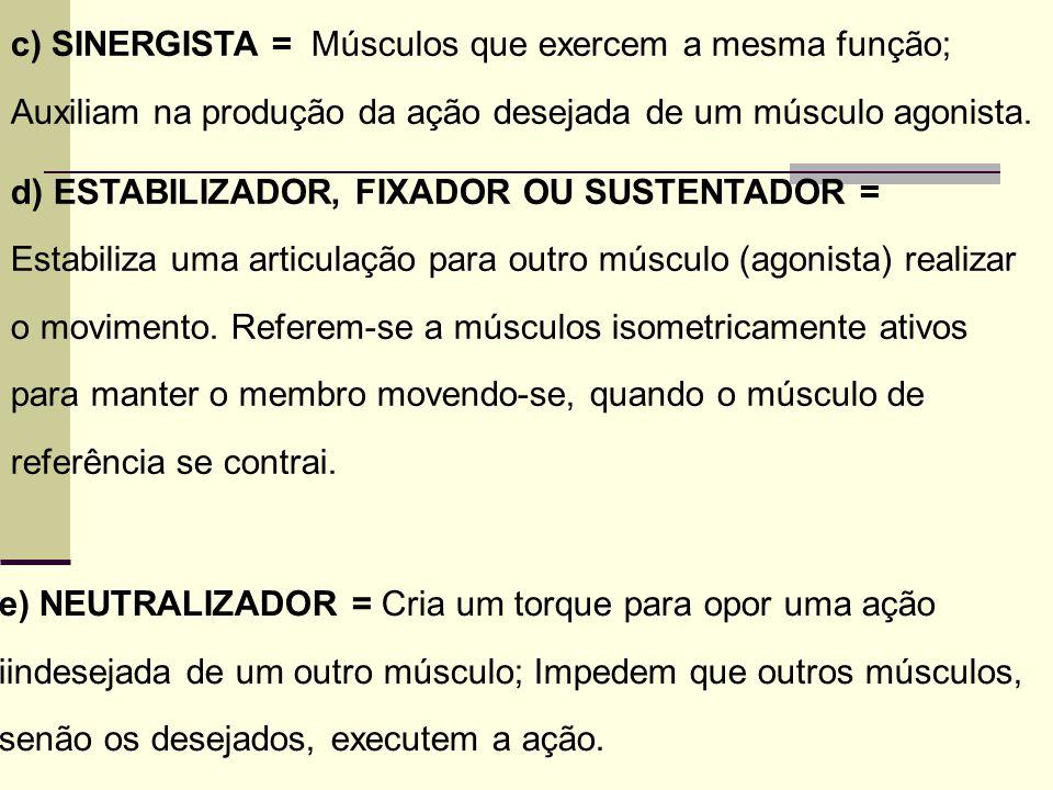 c) SINERGISTA = Músculos que exercem a mesma função; Auxiliam na produção da ação desejada de um músculo agonista. d) ESTABILIZADOR, FIXADOR OU SUSTEN
