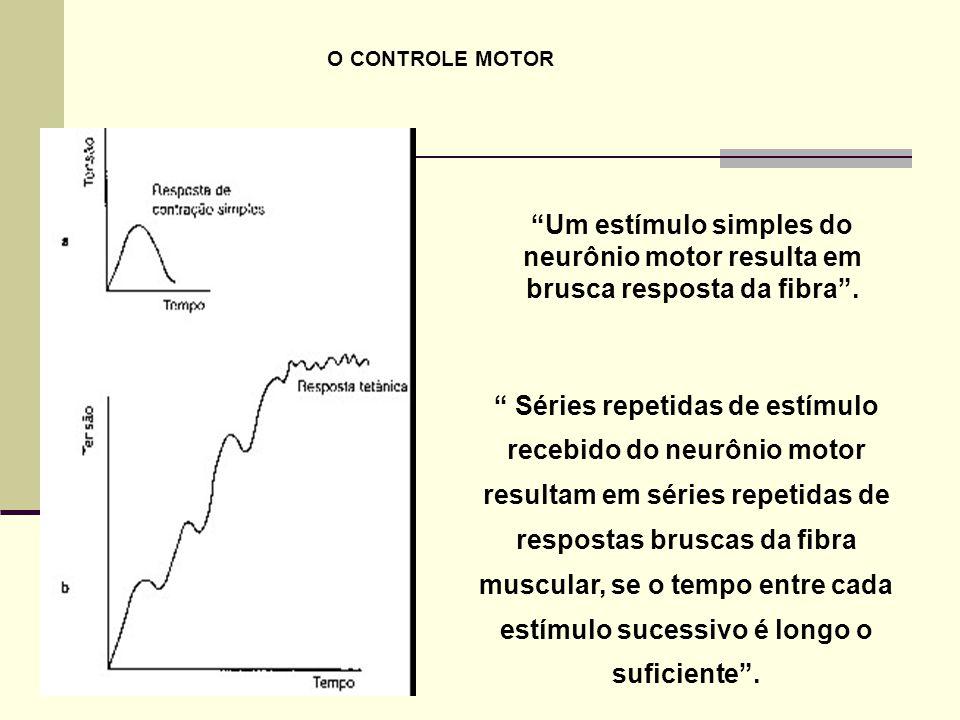 """"""" Séries repetidas de estímulo recebido do neurônio motor resultam em séries repetidas de respostas bruscas da fibra muscular, se o tempo entre cada e"""