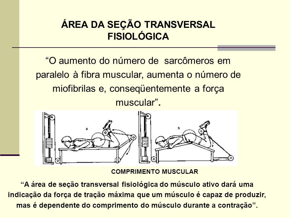 """ÁREA DA SEÇÃO TRANSVERSAL FISIOLÓGICA """"O aumento do número de sarcômeros em paralelo à fibra muscular, aumenta o número de miofibrilas e, conseqüentem"""