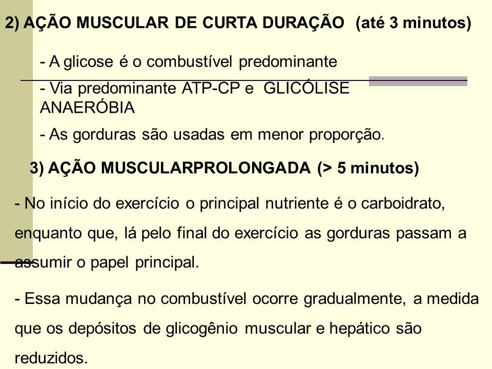 2) AÇÃO MUSCULAR DE CURTA DURAÇÃO (até 3 minutos) - A glicose é o combustível predominante - Via predominante ATP-CP e GLICÓLISE ANAERÓBIA - As gordur