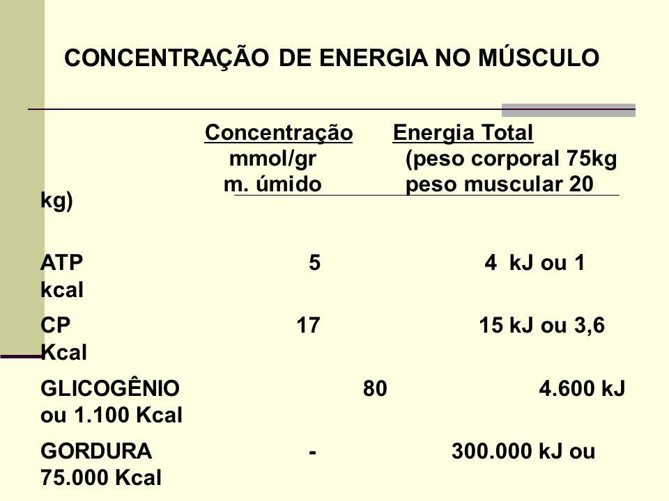 CONCENTRAÇÃO DE ENERGIA NO MÚSCULO Concentração Energia Total mmol/gr (peso corporal 75kg m. úmido peso muscular 20 kg) ATP 5 4 kJ ou 1 kcal CP 17 15