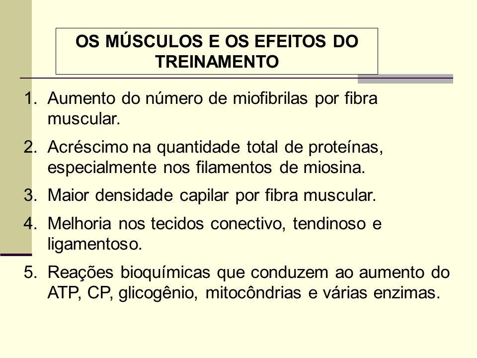 OS MÚSCULOS E OS EFEITOS DO TREINAMENTO 1.Aumento do número de miofibrilas por fibra muscular. 2.Acréscimo na quantidade total de proteínas, especialm