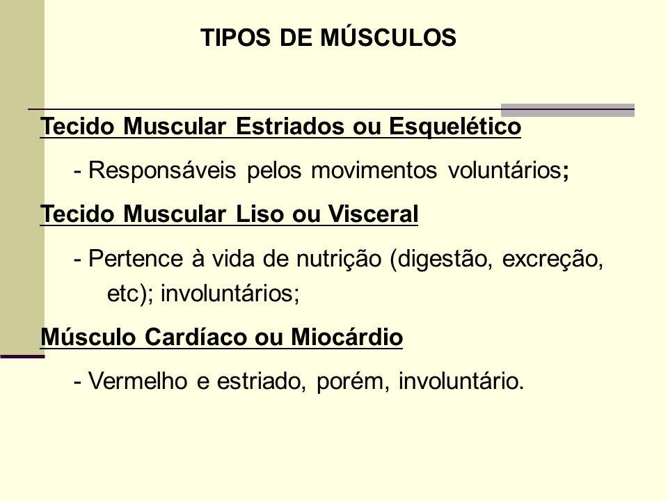 TIPOS DE MÚSCULOS Tecido Muscular Estriados ou Esquelético - Responsáveis pelos movimentos voluntários; Tecido Muscular Liso ou Visceral - Pertence à