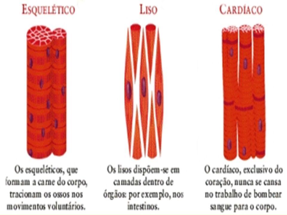 T ipos de força muscular 1.Força máxima ou pura = capacidade máxima do indivíduo em uma contração voluntária máxima.