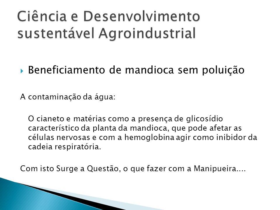  Beneficiamento de mandioca sem poluição A contaminação da água: O cianeto e matérias como a presença de glicosídio característico da planta da mandi