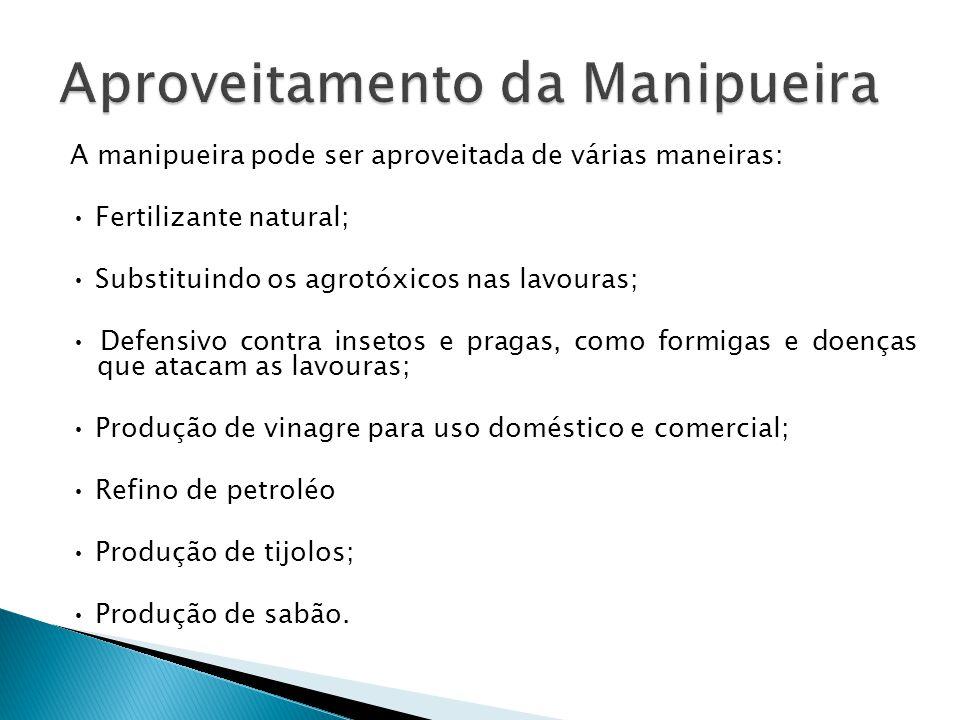 A manipueira pode ser aproveitada de várias maneiras: Fertilizante natural; Substituindo os agrotóxicos nas lavouras; Defensivo contra insetos e praga