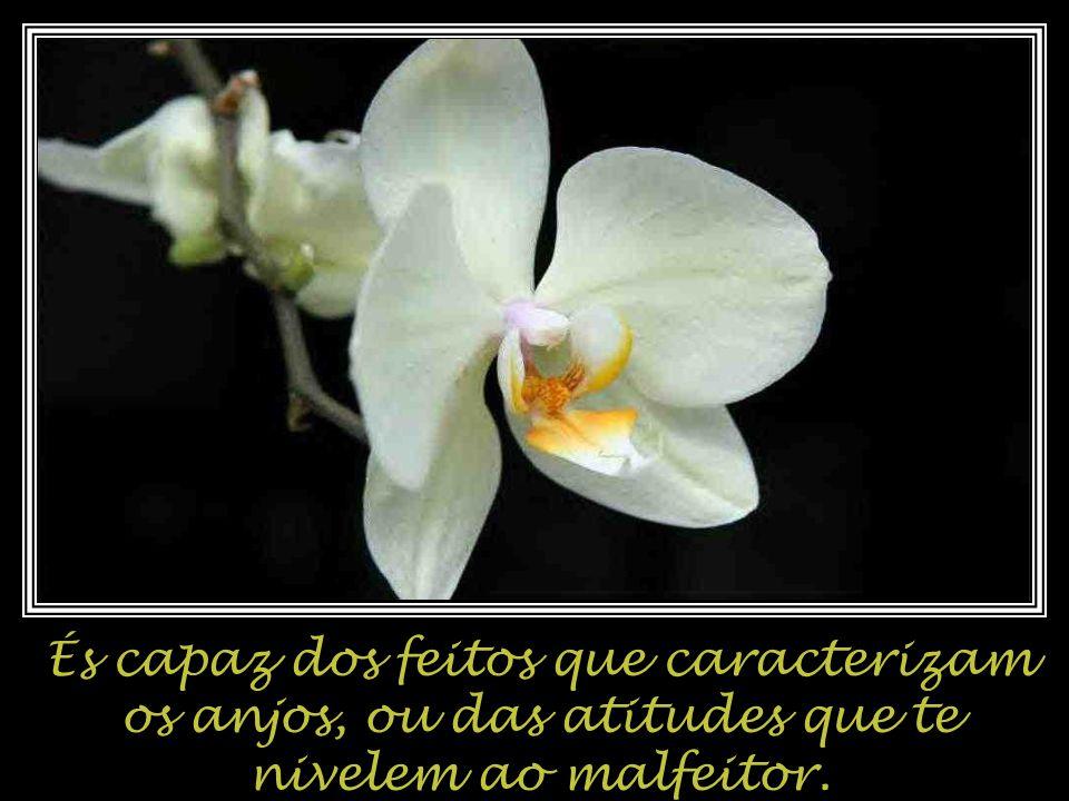 És capaz dos feitos que caracterizam os anjos, ou das atitudes que te nivelem ao malfeitor.