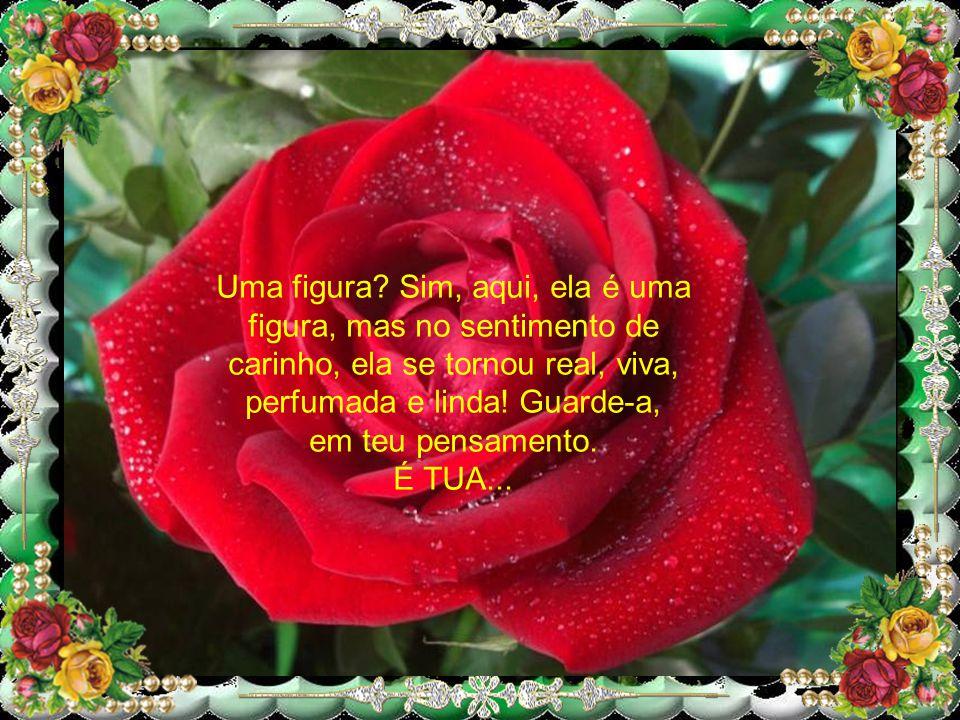 Então, receba esta Rosa, que te ofereço, para enfeitar teu dia, tua noite, tua vida. Ela é a criação de Deus, nesse imenso Mágico Jardim da Vida! É TU