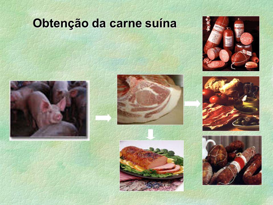 Problemas associados a carne suína Os suínos apresentam susceptibilidade elevada para o desenvolvimento de carnes com características anômalas (lombo e pernil)