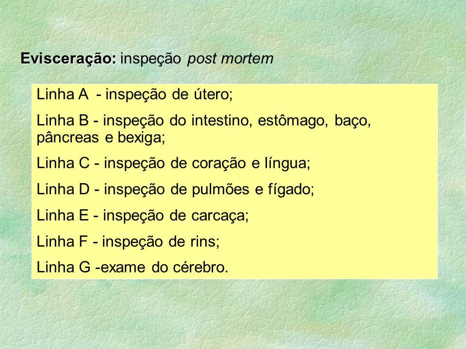 Linha A - inspeção de útero; Linha B - inspeção do intestino, estômago, baço, pâncreas e bexiga; Linha C - inspeção de coração e língua; Linha D - ins