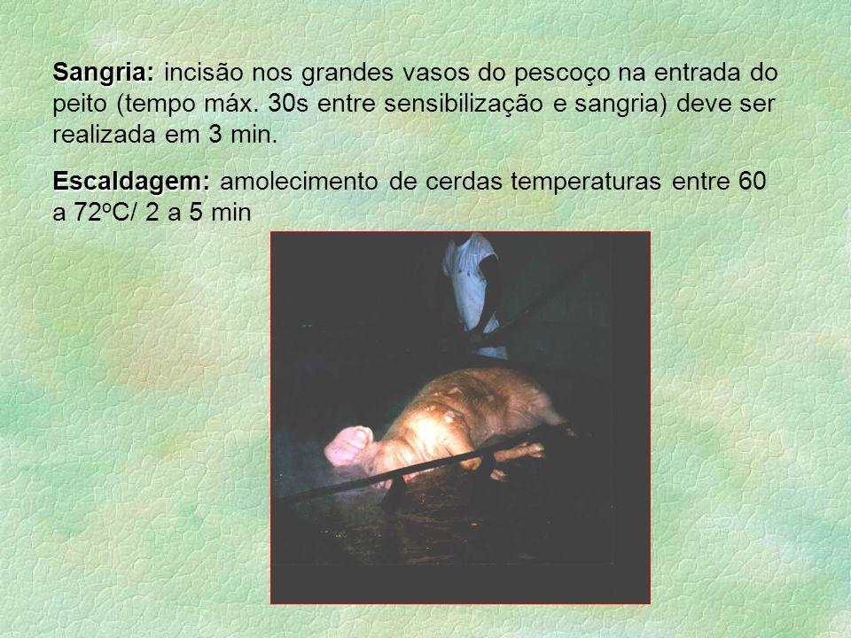 Sangria: Sangria: incisão nos grandes vasos do pescoço na entrada do peito (tempo máx. 30s entre sensibilização e sangria) deve ser realizada em 3 min