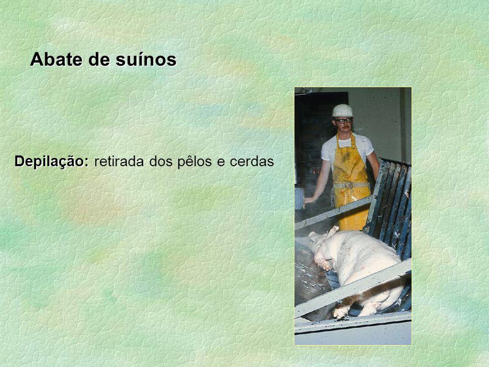 Abate de suínos Depilação: Depilação: retirada dos pêlos e cerdas