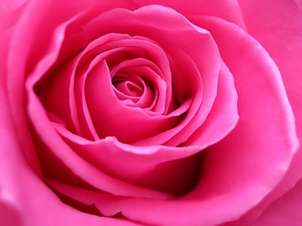 ROSA O ROSA é a cor da paz e da tranquilidade, dos ténues e atractivos raios do amanhecer.