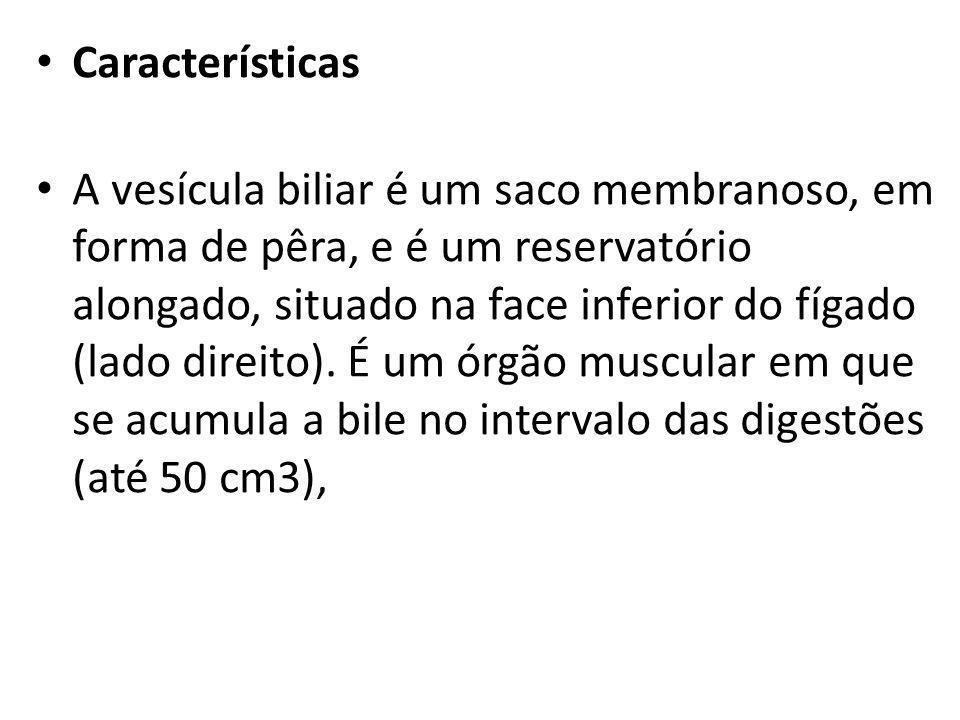 Características A vesícula biliar é um saco membranoso, em forma de pêra, e é um reservatório alongado, situado na face inferior do fígado (lado direi