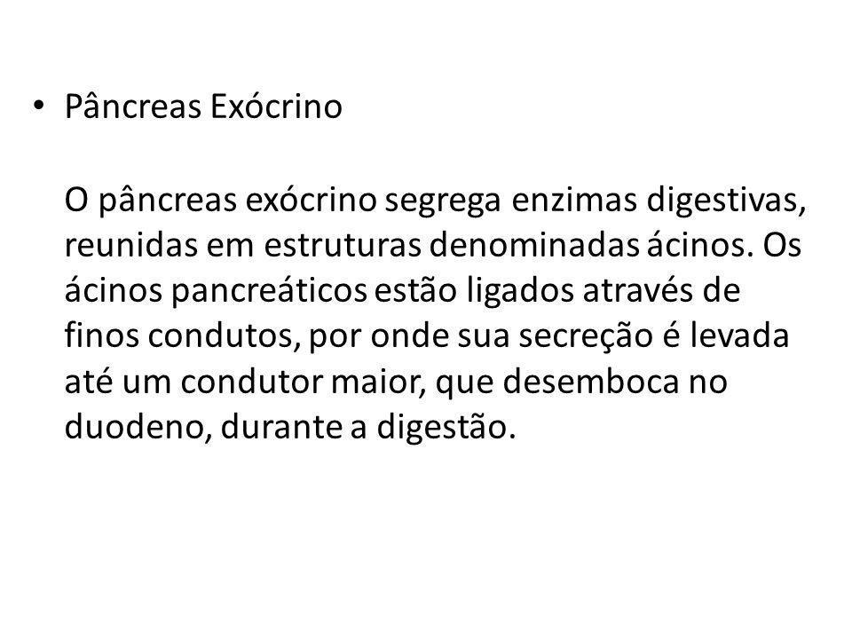 Pâncreas Exócrino O pâncreas exócrino segrega enzimas digestivas, reunidas em estruturas denominadas ácinos. Os ácinos pancreáticos estão ligados atra