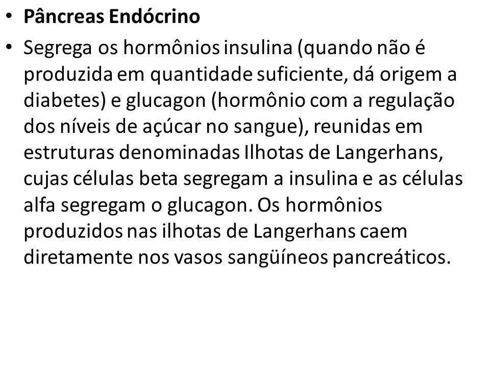 Pâncreas Endócrino Segrega os hormônios insulina (quando não é produzida em quantidade suficiente, dá origem a diabetes) e glucagon (hormônio com a re