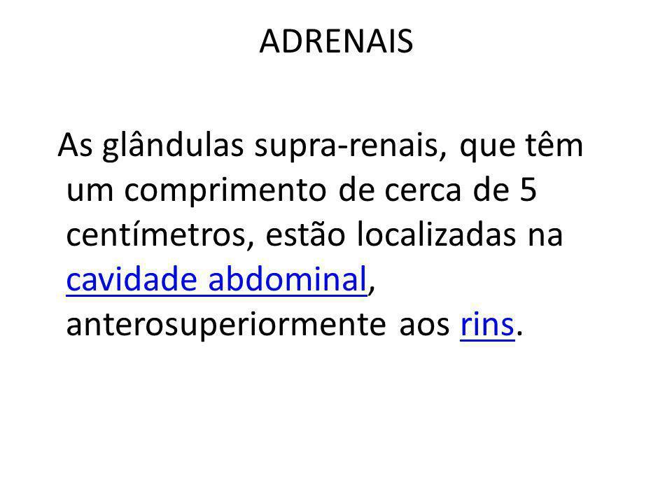 ADRENAIS As glândulas supra-renais, que têm um comprimento de cerca de 5 centímetros, estão localizadas na cavidade abdominal, anterosuperiormente aos