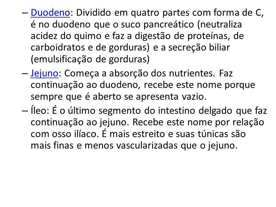 – Duodeno: Dividido em quatro partes com forma de C, é no duodeno que o suco pancreático (neutraliza acidez do quimo e faz a digestão de proteínas, de