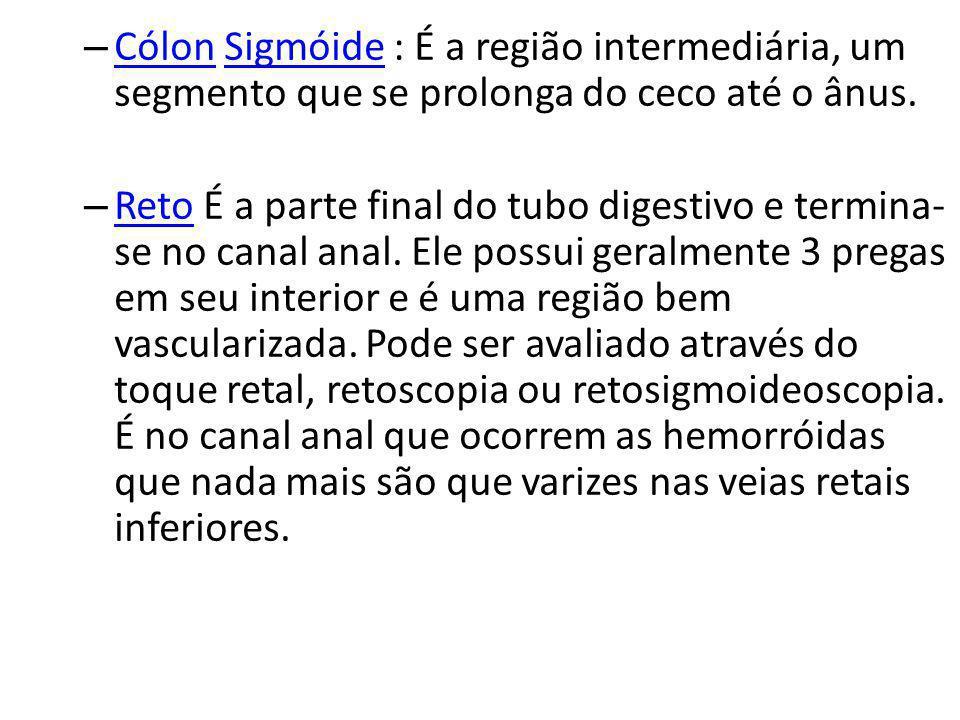 – Cólon Sigmóide : É a região intermediária, um segmento que se prolonga do ceco até o ânus. CólonSigmóide – Reto É a parte final do tubo digestivo e