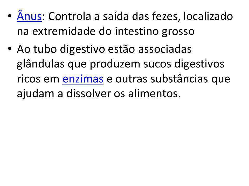 Ânus: Controla a saída das fezes, localizado na extremidade do intestino grosso Ânus Ao tubo digestivo estão associadas glândulas que produzem sucos d