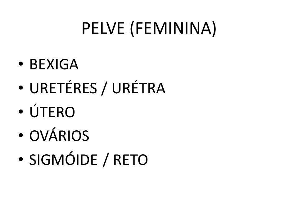 PELVE (FEMININA) BEXIGA URETÉRES / URÉTRA ÚTERO OVÁRIOS SIGMÓIDE / RETO