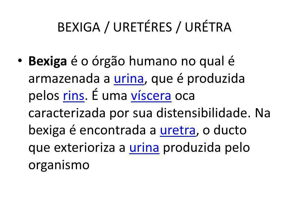 BEXIGA / URETÉRES / URÉTRA Bexiga é o órgão humano no qual é armazenada a urina, que é produzida pelos rins. É uma víscera oca caracterizada por sua d