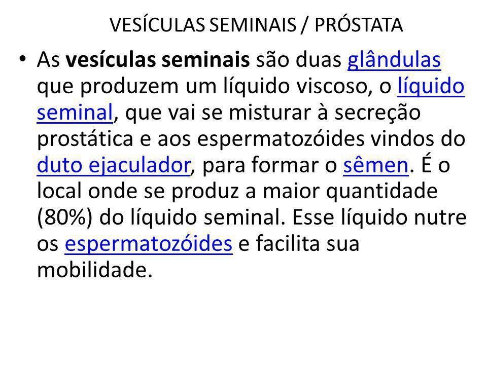VESÍCULAS SEMINAIS / PRÓSTATA As vesículas seminais são duas glândulas que produzem um líquido viscoso, o líquido seminal, que vai se misturar à secre