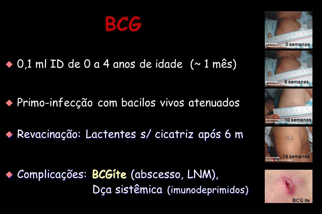 BCG   0,1 ml ID de 0 a 4 anos de idade (~ 1 mês)   Primo-infecção com bacilos vivos atenuados   0,1 ml ID de 0 a 4 anos de idade (~ 1 mês)   P