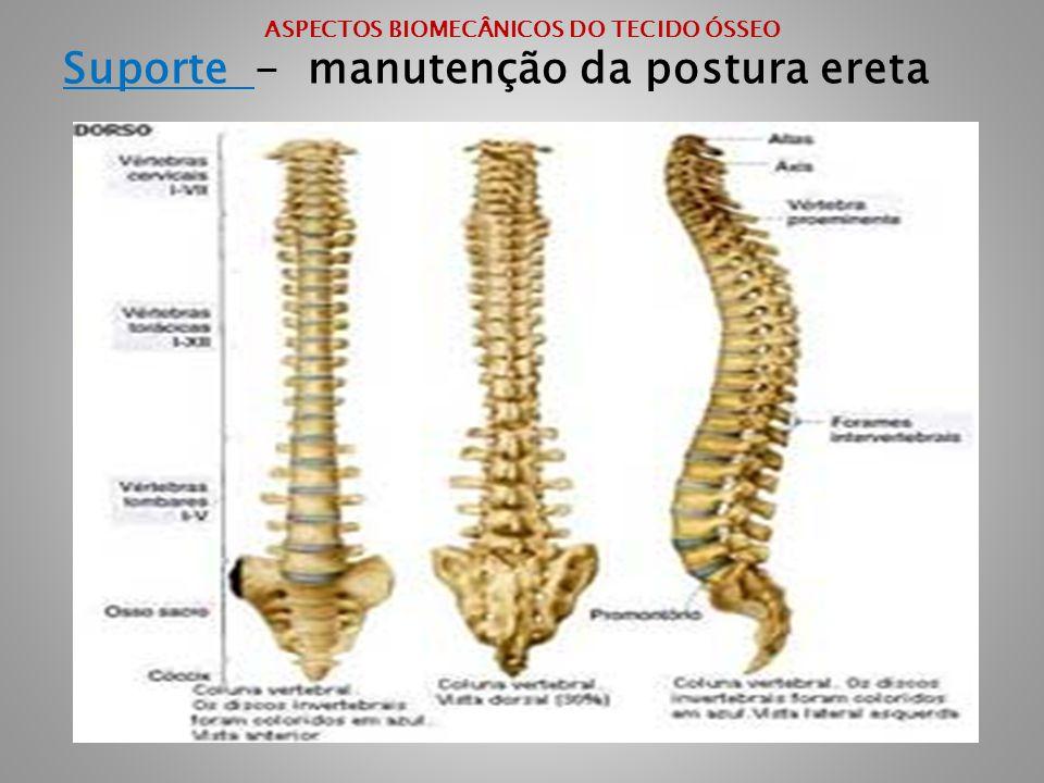 ASPECTOS BIOMECÂNICOS DO TECIDO ÓSSEO Suporte - manutenção da postura ereta