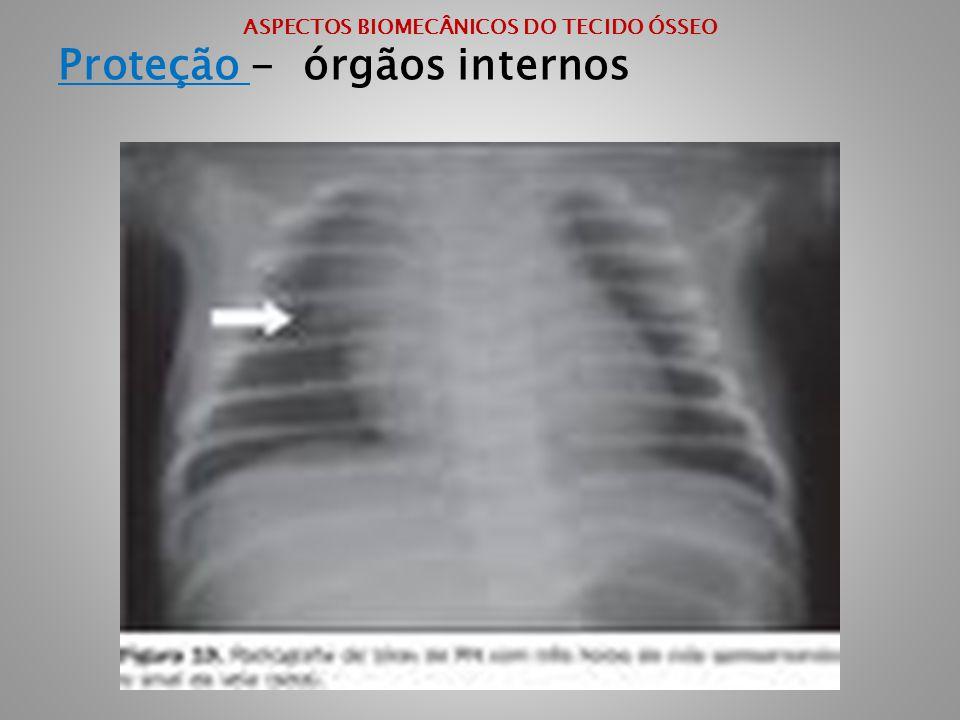 ASPECTOS BIOMECÂNICOS DO TECIDO ÓSSEO Proteção - órgãos internos