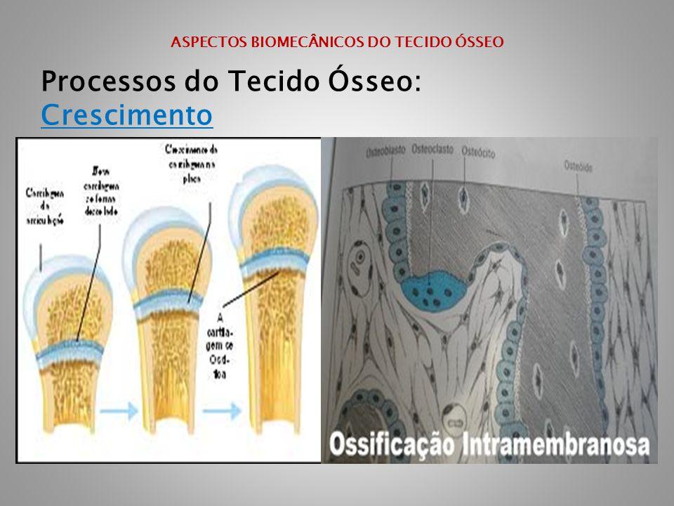 ASPECTOS BIOMECÂNICOS DO TECIDO ÓSSEO Processos do Tecido Ósseo: Crescimento