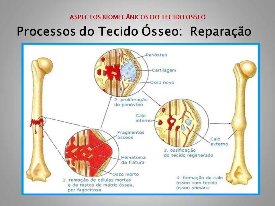 ASPECTOS BIOMECÂNICOS DO TECIDO ÓSSEO Processos do Tecido Ósseo: Reparação
