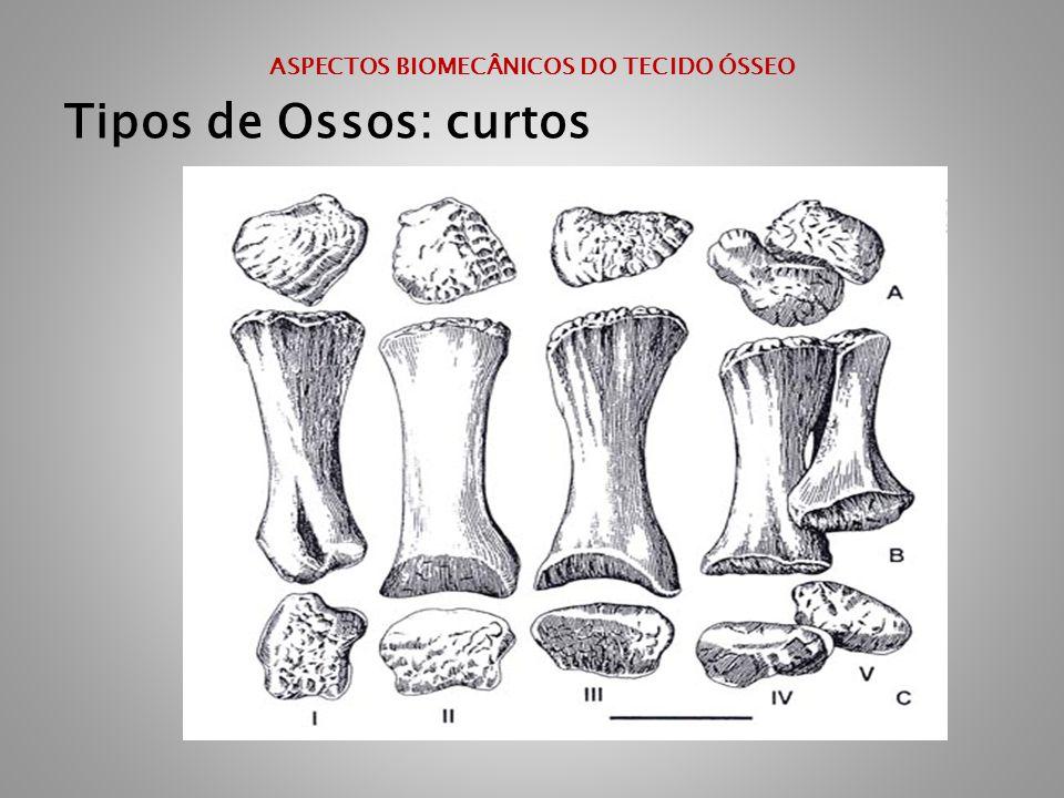 ASPECTOS BIOMECÂNICOS DO TECIDO ÓSSEO Tipos de Ossos: curtos