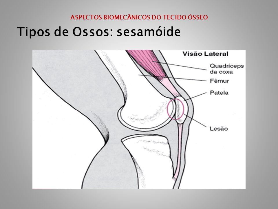 ASPECTOS BIOMECÂNICOS DO TECIDO ÓSSEO Tipos de Ossos: sesamóide