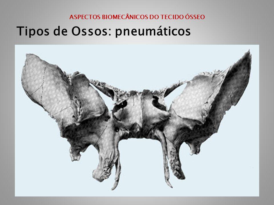 ASPECTOS BIOMECÂNICOS DO TECIDO ÓSSEO Tipos de Ossos: pneumáticos