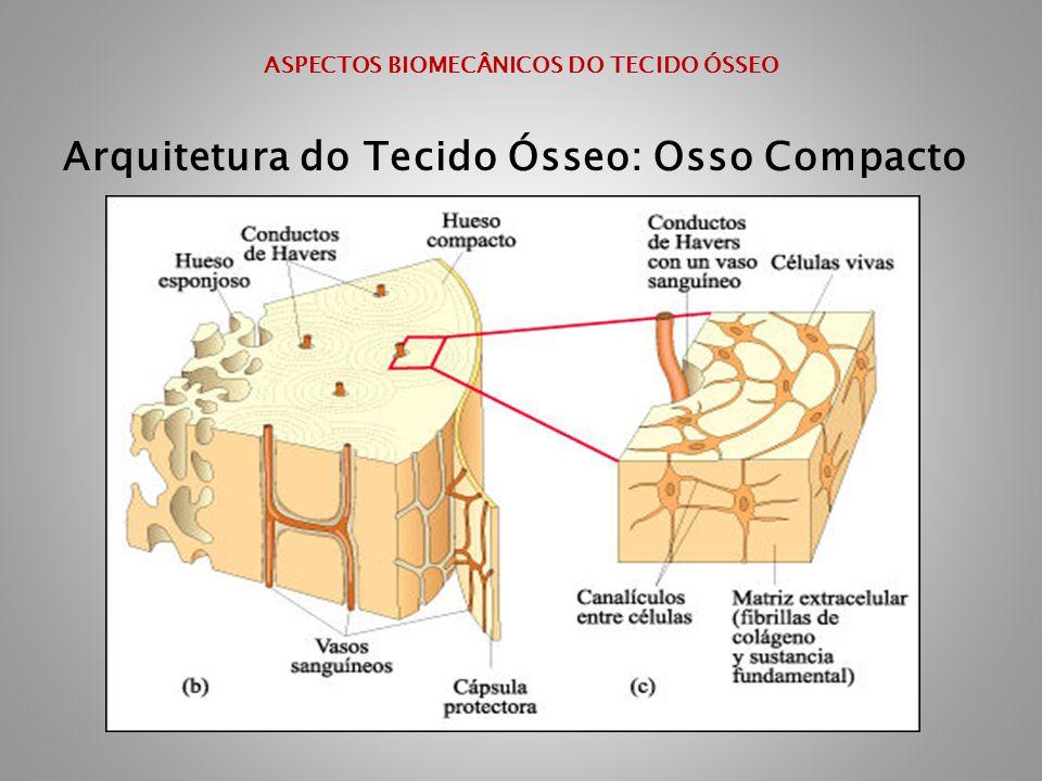 ASPECTOS BIOMECÂNICOS DO TECIDO ÓSSEO Arquitetura do Tecido Ósseo: Osso Compacto