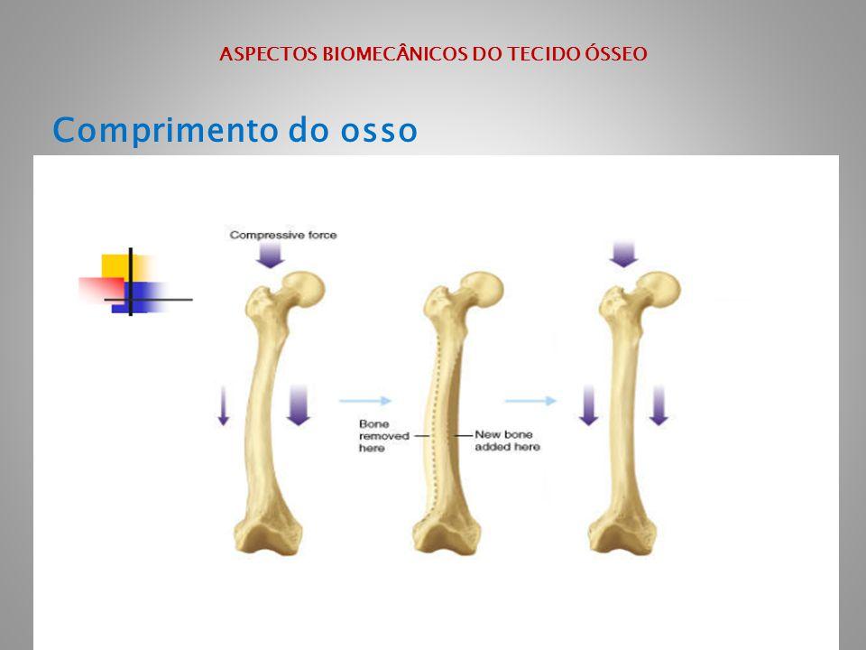 ASPECTOS BIOMECÂNICOS DO TECIDO ÓSSEO Comprimento do osso
