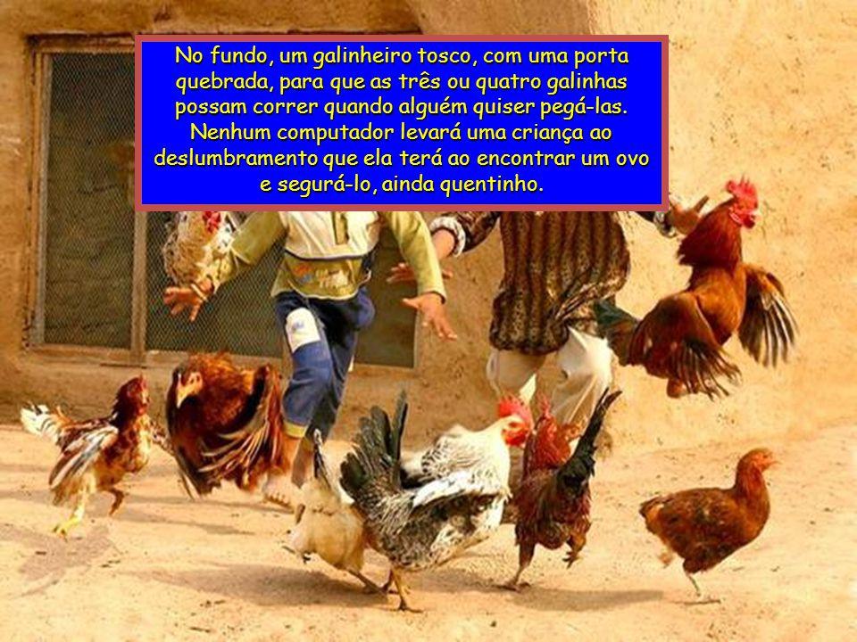 No fundo, um galinheiro tosco, com uma porta quebrada, para que as três ou quatro galinhas possam correr quando alguém quiser pegá-las.
