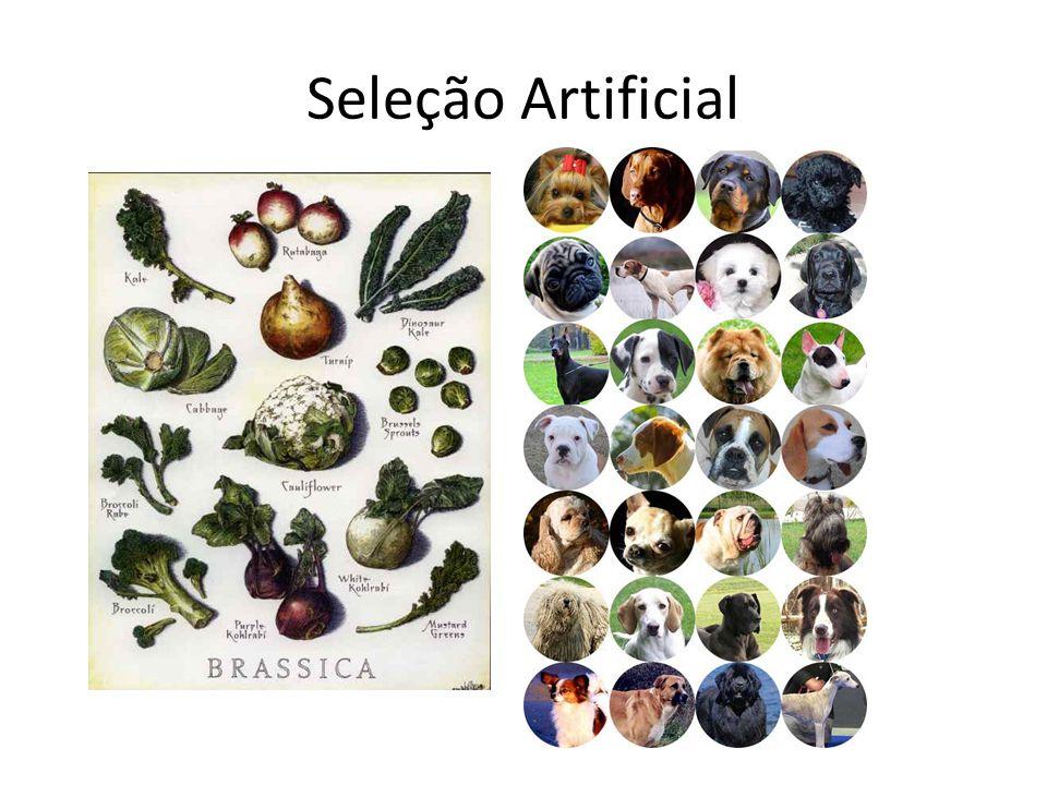 Seleção Artificial