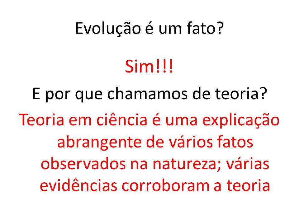 Evolução é um fato? Sim!!! E por que chamamos de teoria? Teoria em ciência é uma explicação abrangente de vários fatos observados na natureza; várias