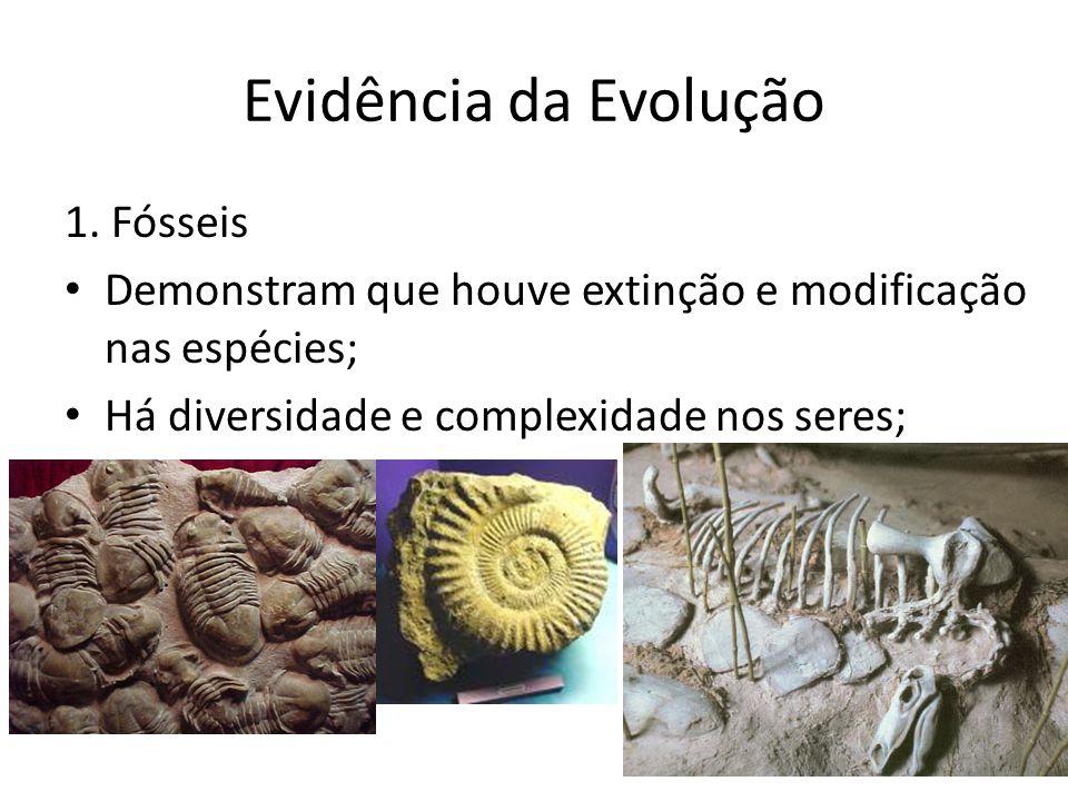 Evidência da Evolução 1. Fósseis Demonstram que houve extinção e modificação nas espécies; Há diversidade e complexidade nos seres;