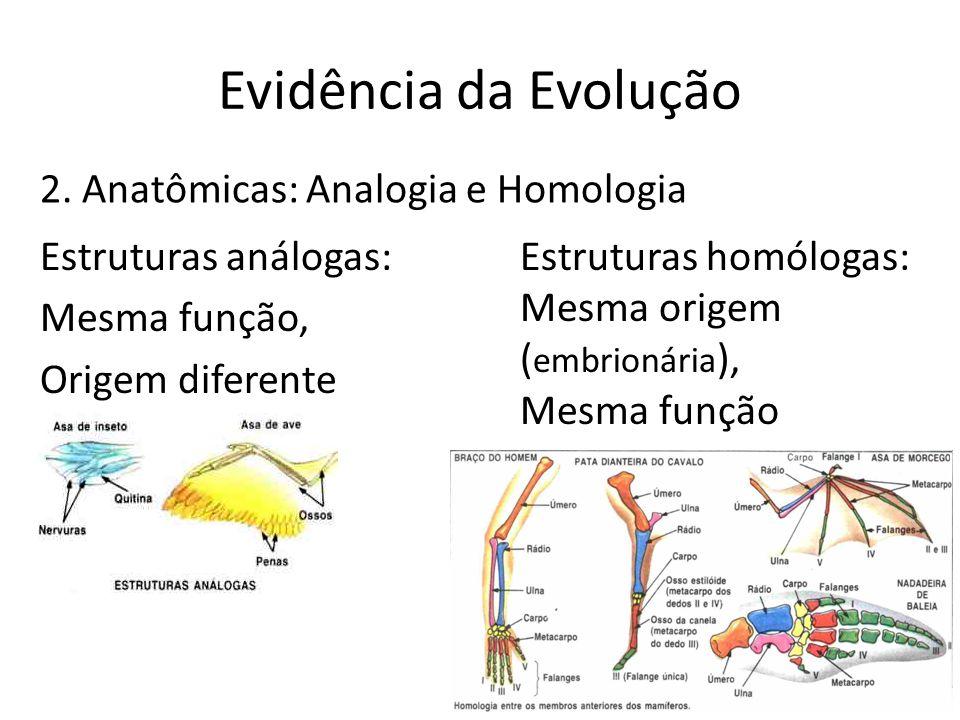 Evidência da Evolução Estruturas análogas: Mesma função, Origem diferente 2. Anatômicas: Analogia e Homologia Estruturas homólogas: Mesma origem ( emb