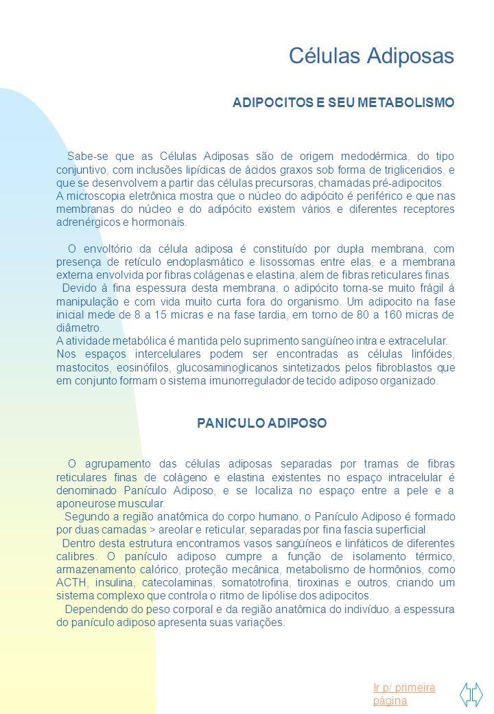 Ir p/ primeira página Células Adiposas ADIPOCITOS E SEU METABOLISMO Sabe-se que as Células Adiposas são de origem medodérmica, do tipo conjuntivo, com