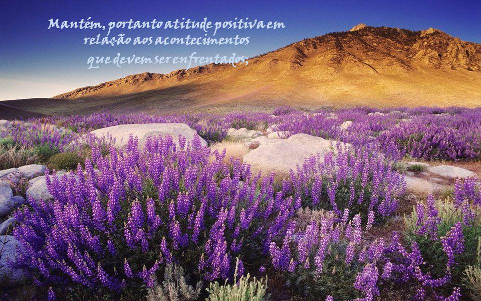Cada amanhecer representa divina concessão, que não podes nem deves desconsiderar.