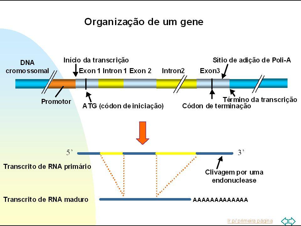 C T G T C A C T C G G G T G A C AG T G A G C C C A DNA: ESTRUTURA GERAL
