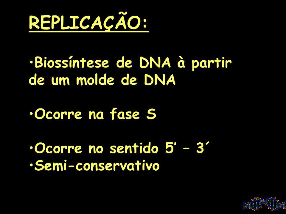 FLUXO DA EXPRESSÃO GÊNICA DNA RNA PROTEÍNA DNA