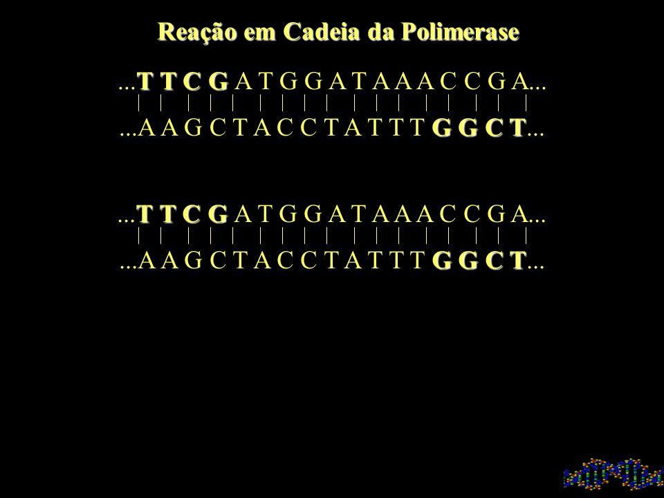 T T C G...T T C G A T G G A T A A A C C G A...