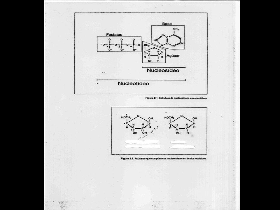 Nucleotídeo Nucleotídeo Unidade Formadora de Ac. Nucléico