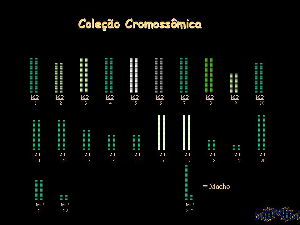 Tipos: DNA (Ac. Desoxirribonucléico) RNA (Ac. Ribonucléico)